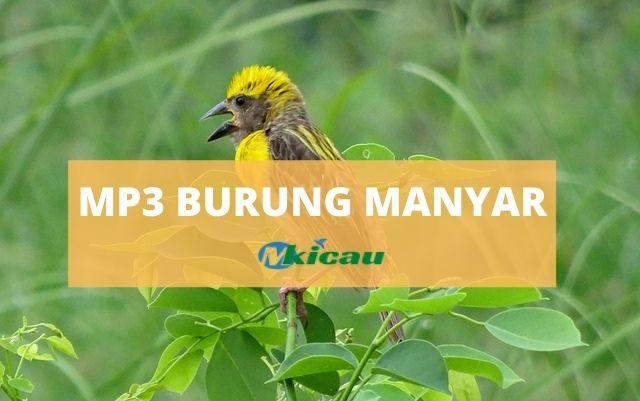 MP3 SUARA BURUNG MANYAR