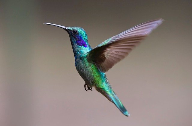 masteran mp3 suara burung kolibri