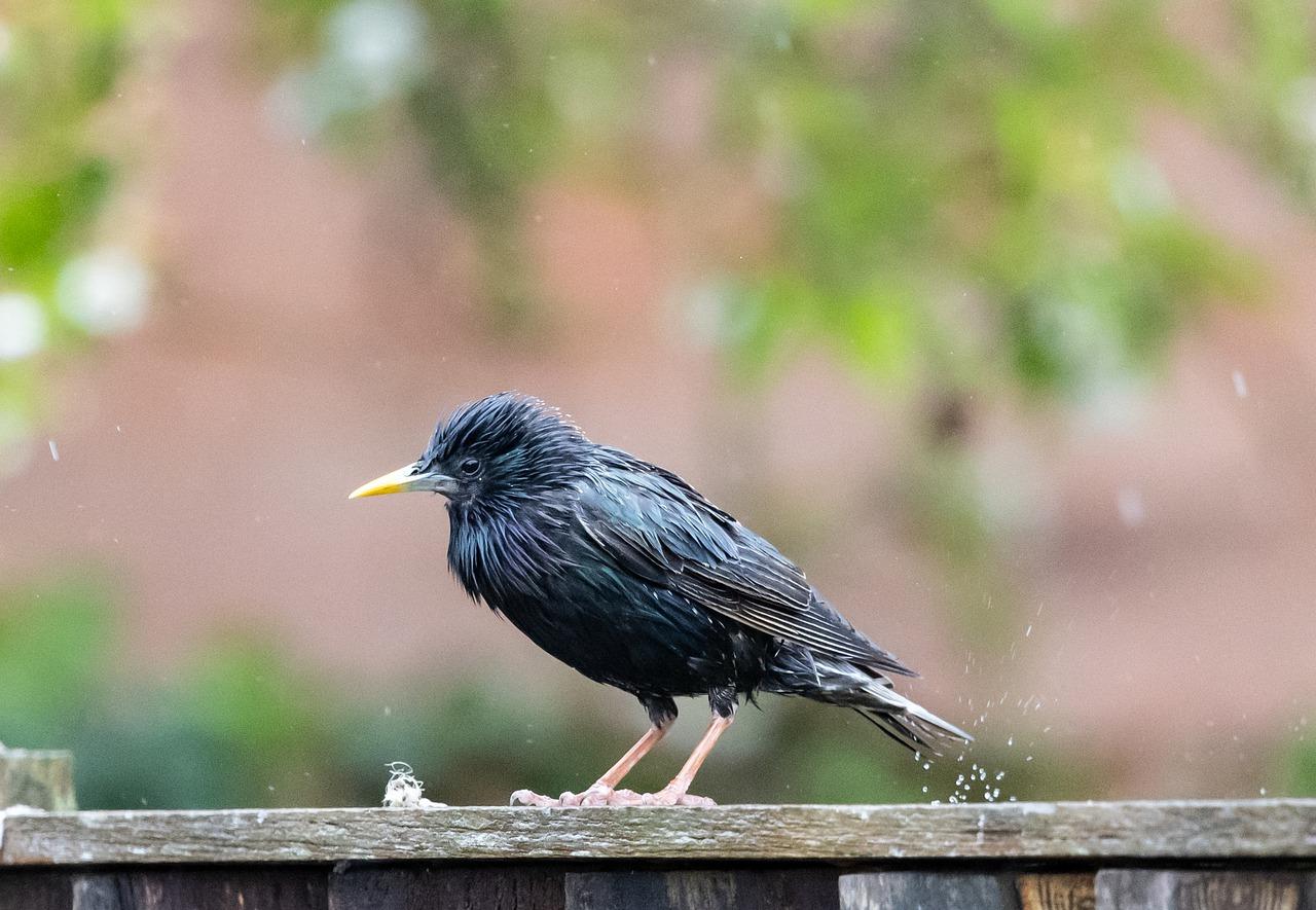 Menjaga kesehatan burung pada saat musim hujan