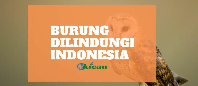 Burung Dilindungi Indonesia