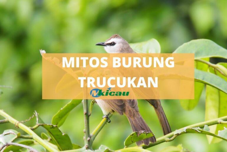 MITOS BURUNG TRUCUKAN