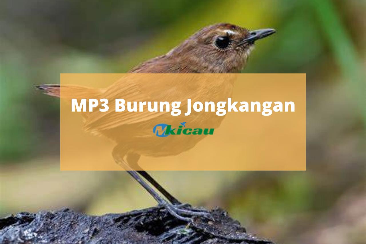 Download Suara Burung Jongkangan Jatan Dan Betina Gacor Full Isian Mp3 Brachypteryx Leucophrys