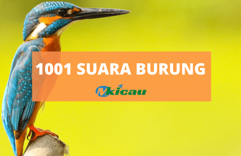 1001 SUARA BURUNG-min