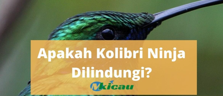 burung kolibri yang dilindungi