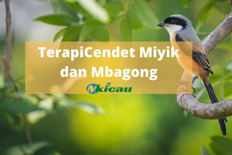 TerapiCendet Miyik dan Mbagong